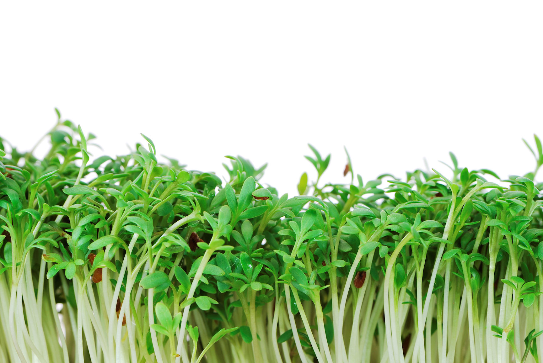 Growing Food Indoors