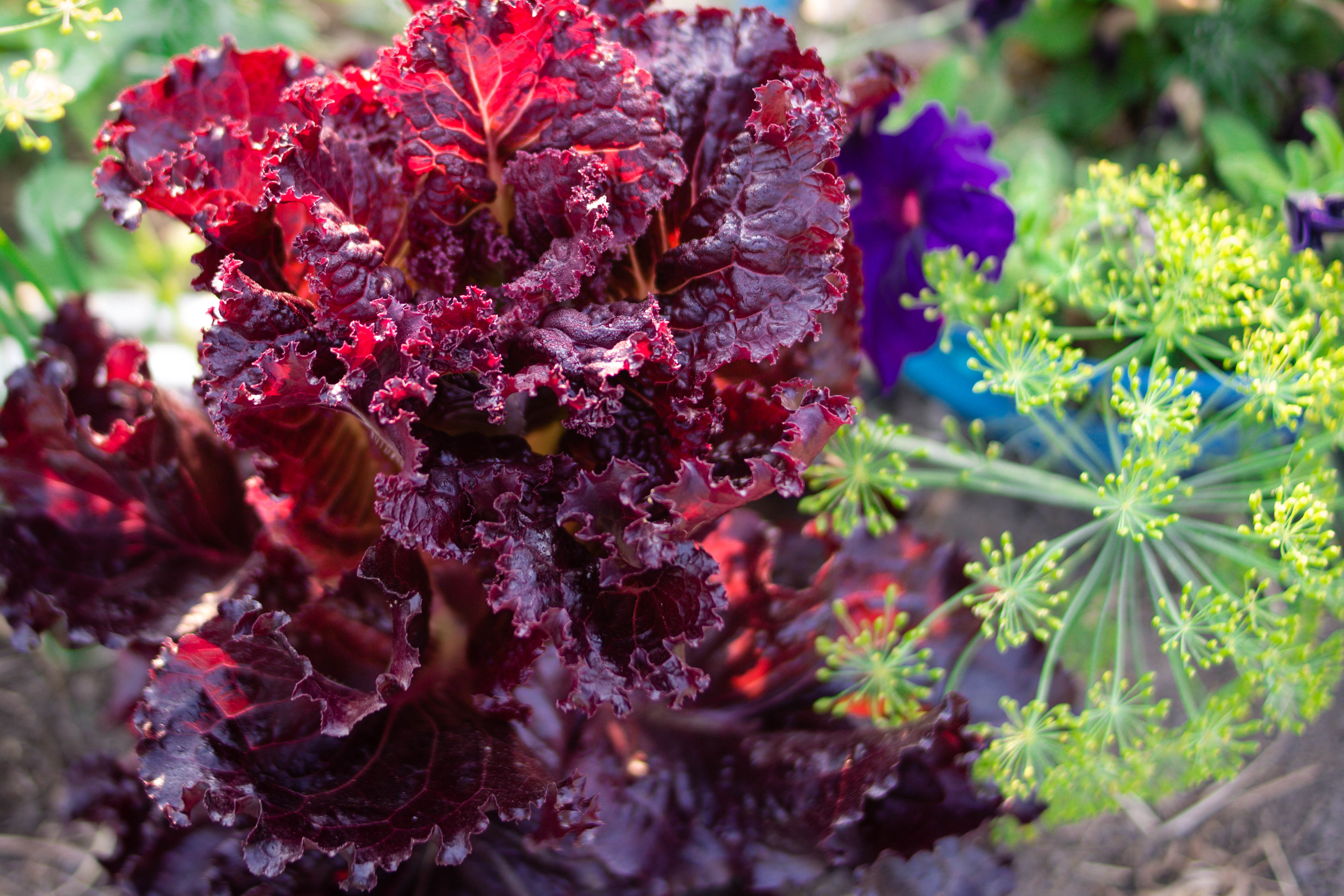 Companion Planting Flowers with Vegetables