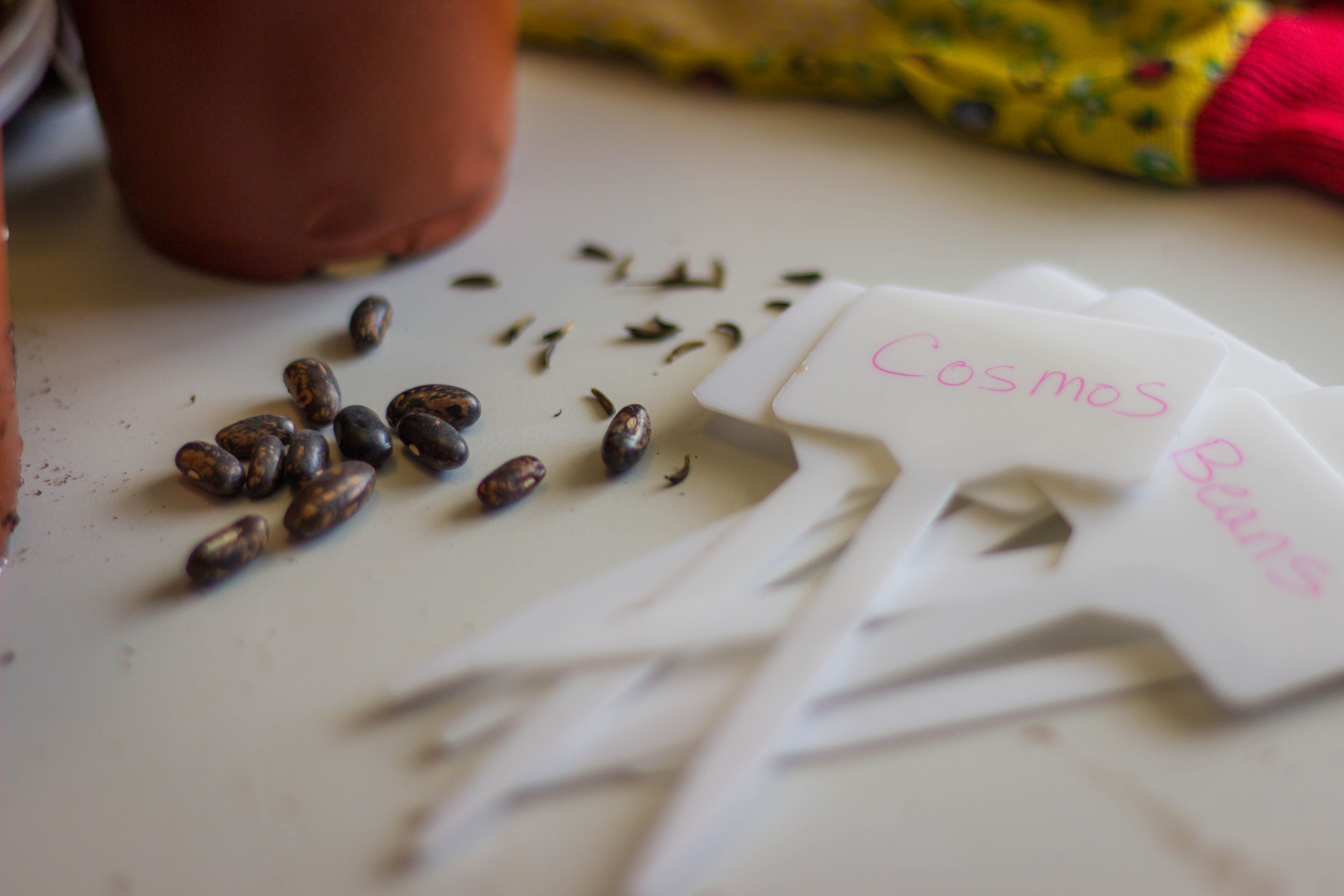 Buy seeds, Not Plants