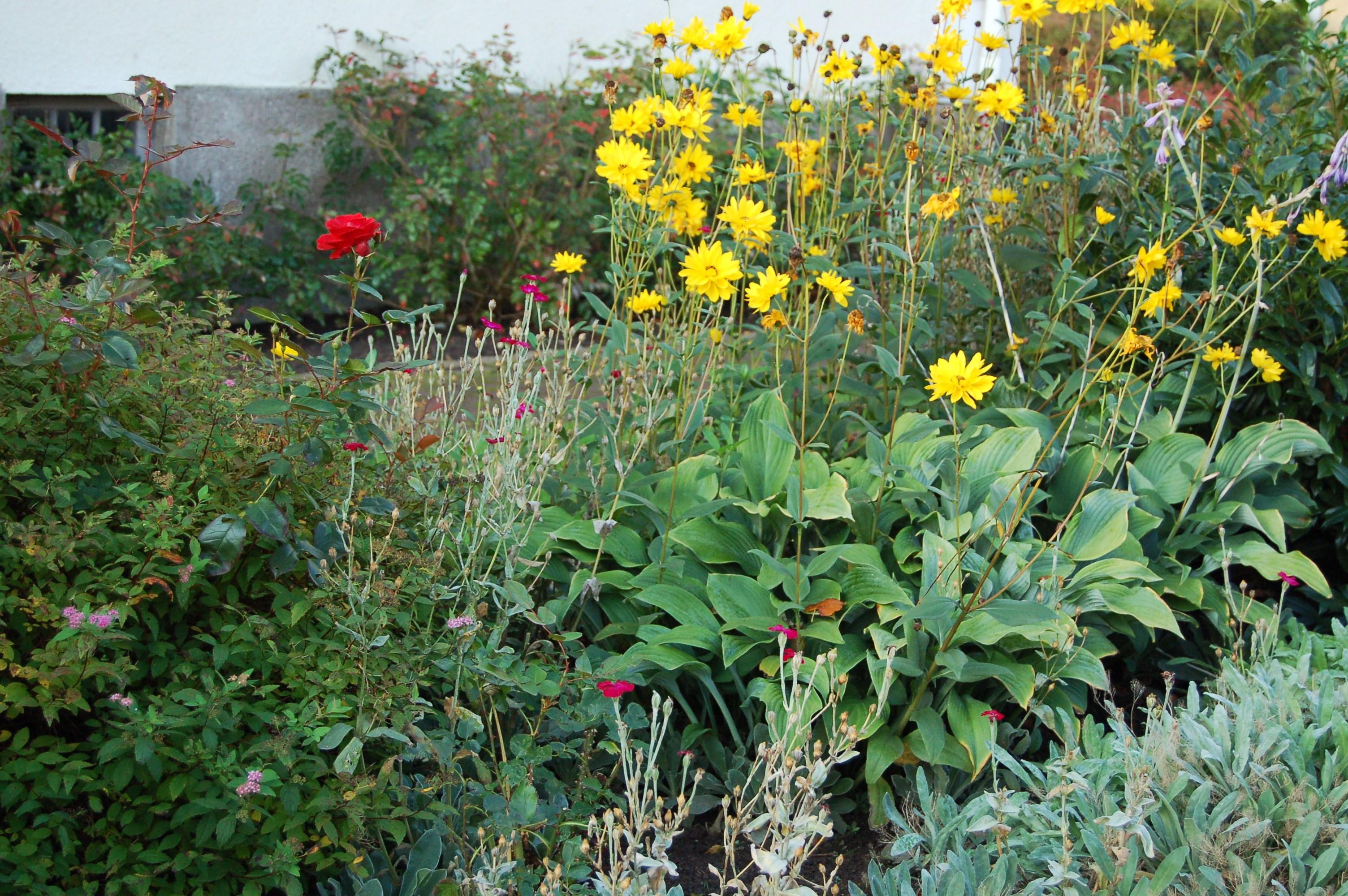 Bringing Back the Kitchen Garden – Companion Planting