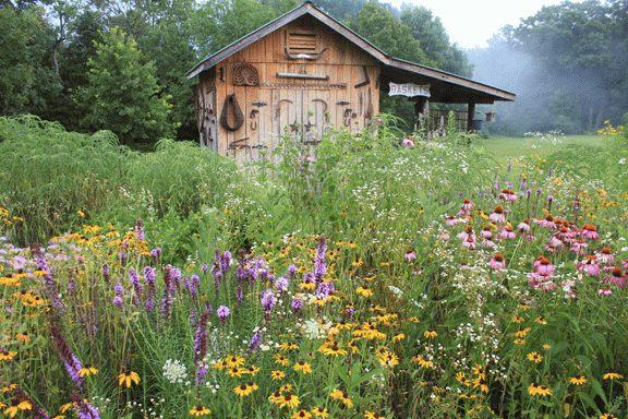 Native Wildflower Plantings Step-by-Step!