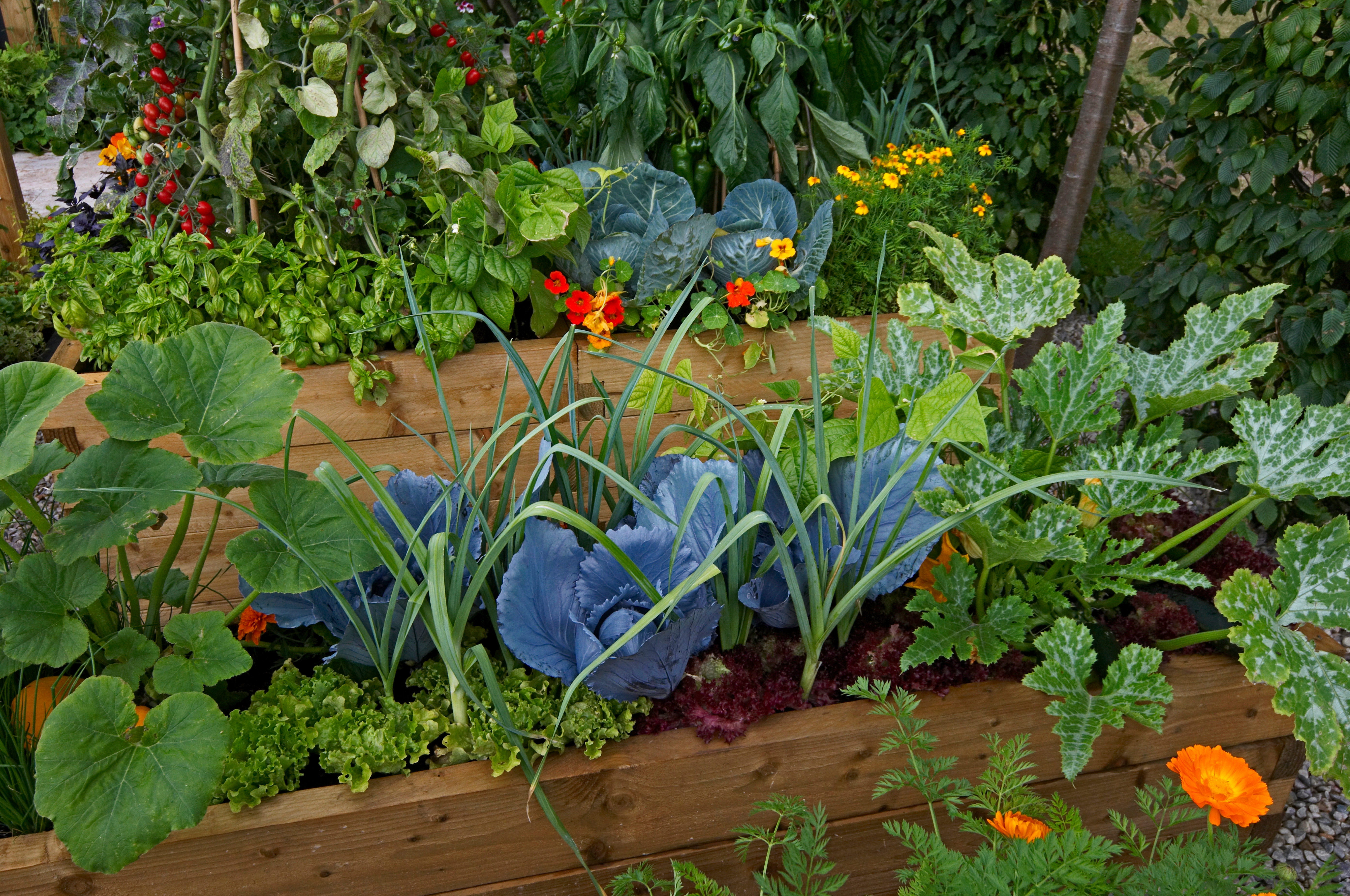 Preventing Garden Pests the Natural Way