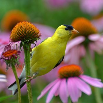 Creating a Bird Habitat in Your Garden