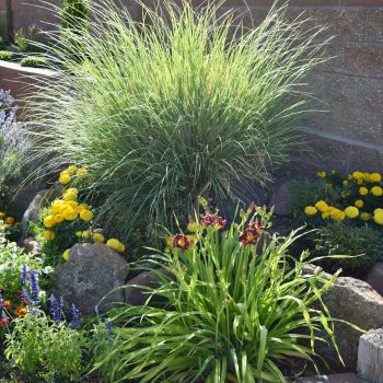 Drought-Tolerant Landscaping: Save Water, Spread Beauty