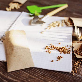Plan a Stress-Free Garden in 5 Steps