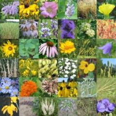 Mixes/Small-Dry-Spring.jpg