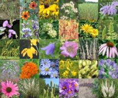 Mixes/Small-Short-Spring.jpg