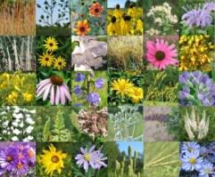 Mixes/Small-Tall-Spring.jpg
