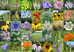 Mixes/Small-Woodland.jpg