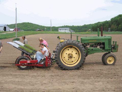 Tractor-transplanter